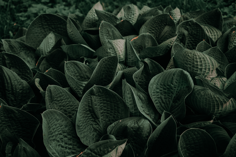Black Plants Photo
