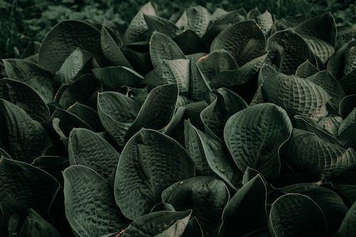 Immagine gratuita di bellissimo, campo, colore, erba
