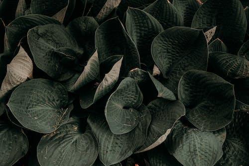 Kostenloses Stock Foto zu blätter, blüte, draußen, dunkelheit
