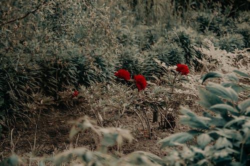 Gratis lagerfoto af blomster, dagslys, farve, græs