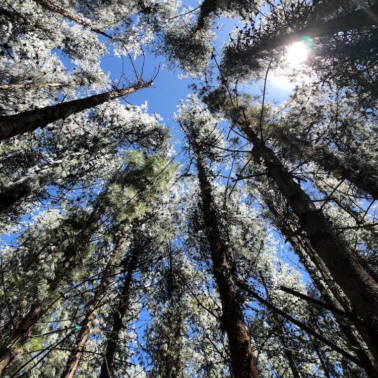 ágak, alacsony szögű fényképezés, erdő