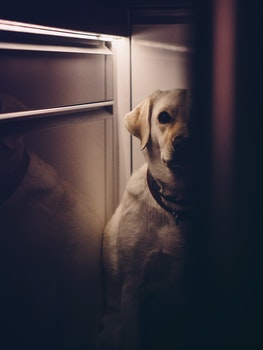 Free stock photo of animal, dog, pet, hiding