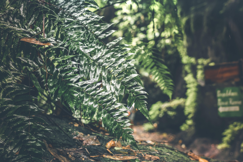 Základová fotografie zdarma na téma čerstvý, denní světlo, kapradina, krajina