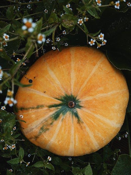 Yellow Pumpkin Near White Flowers