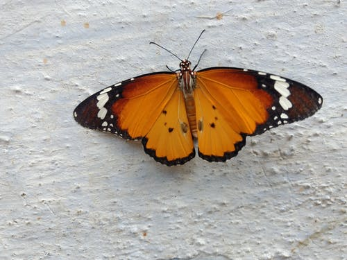Free stock photo of butterfly, nature, patterns and colours