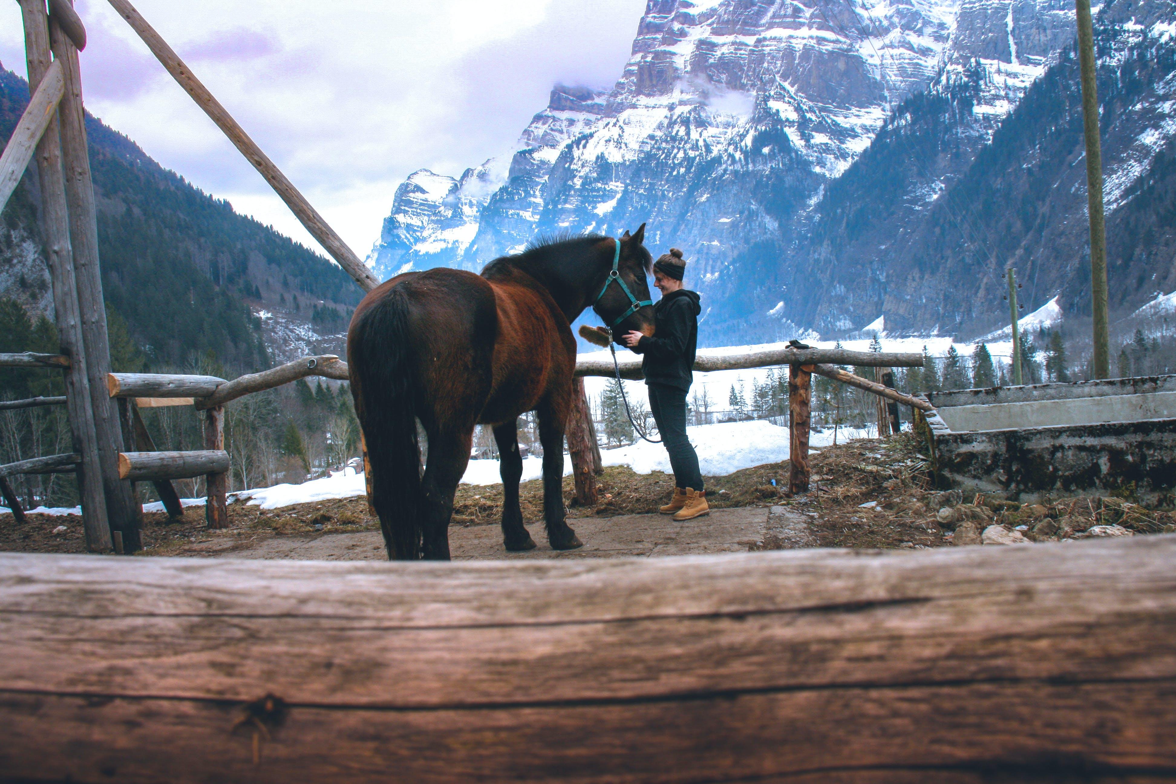 Free stock photo of girl, girl horse, horse, horses