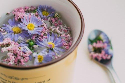 Foto stok gratis bejana, bunga, dalam ruangan