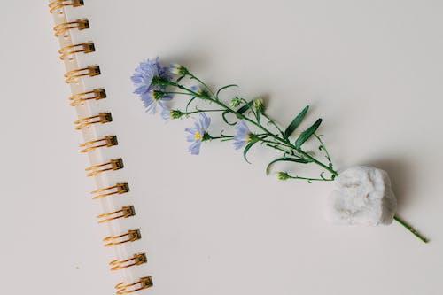 Foto stok gratis abstrak, alat pembayaran, bunga