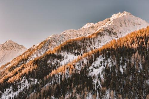Ingyenes stockfotó alacsony szögű felvétel, Alpok, erdő, fagy témában