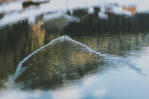 冷, 反射, 天氣, 寒冷 的 免费素材照片