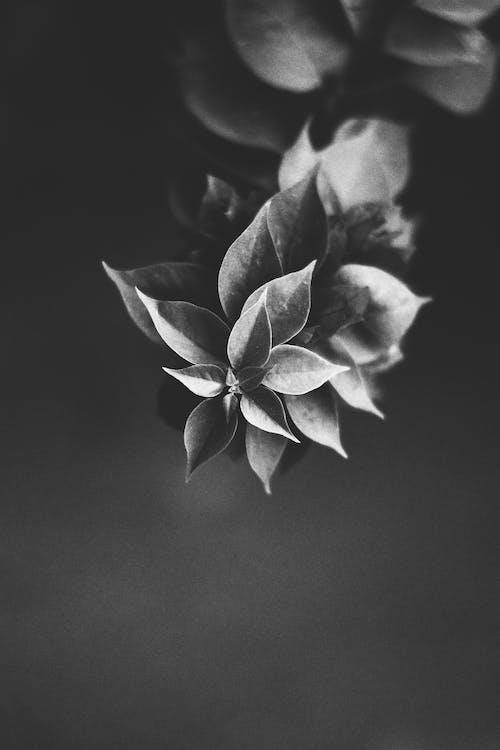 ft, güzel çiçekler, siyah ve beyaz içeren Ücretsiz stok fotoğraf