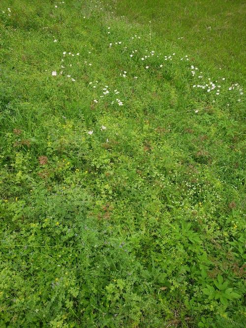 Free stock photo of evergreen, green field