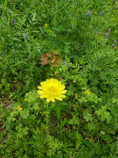 Free stock photo of green background, wallpaper, yellow flower
