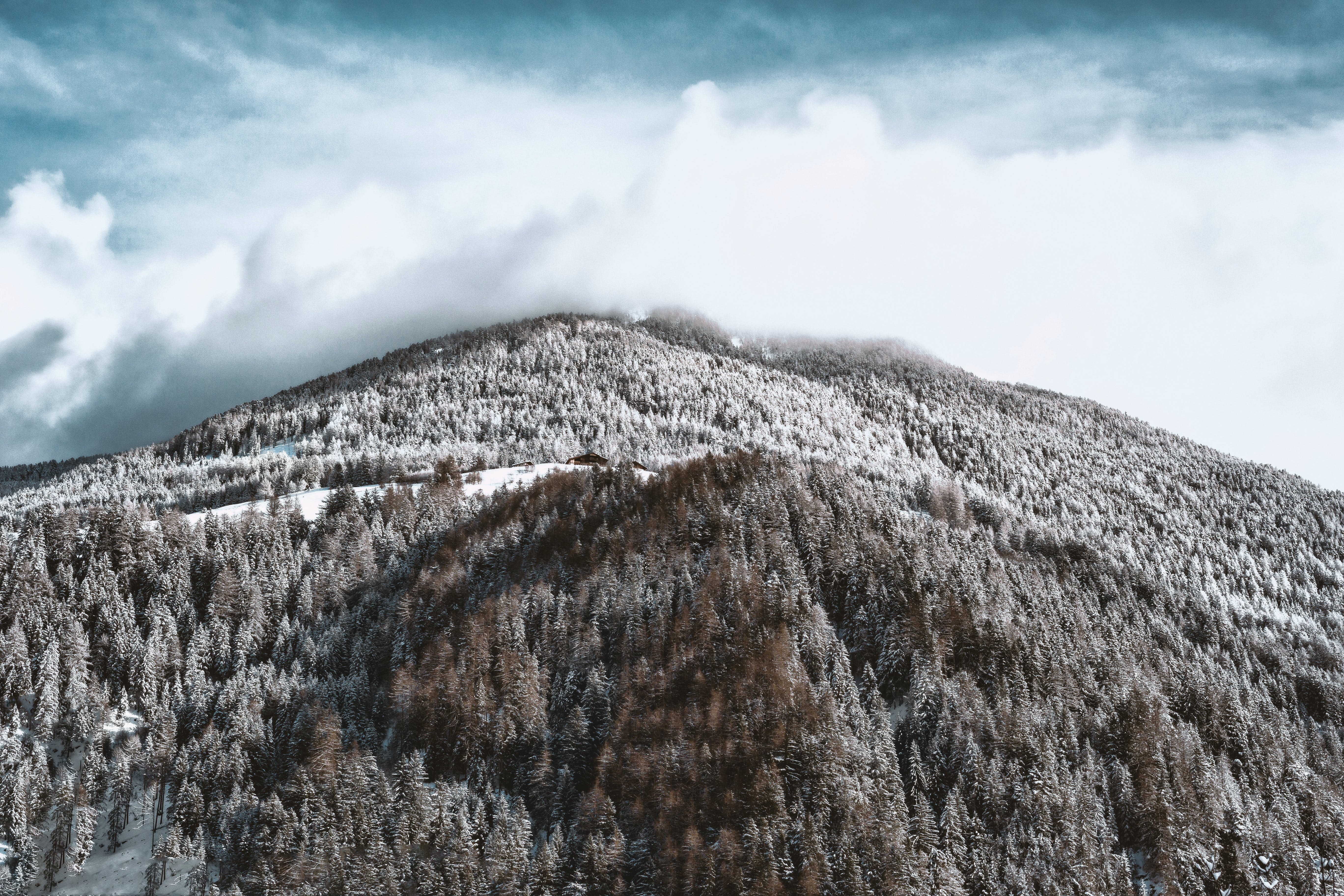 Snow-covered Mountain and Forest