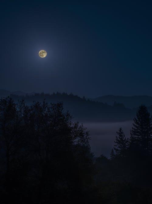 Free stock photo of evergreens, fog, full moon, landscape