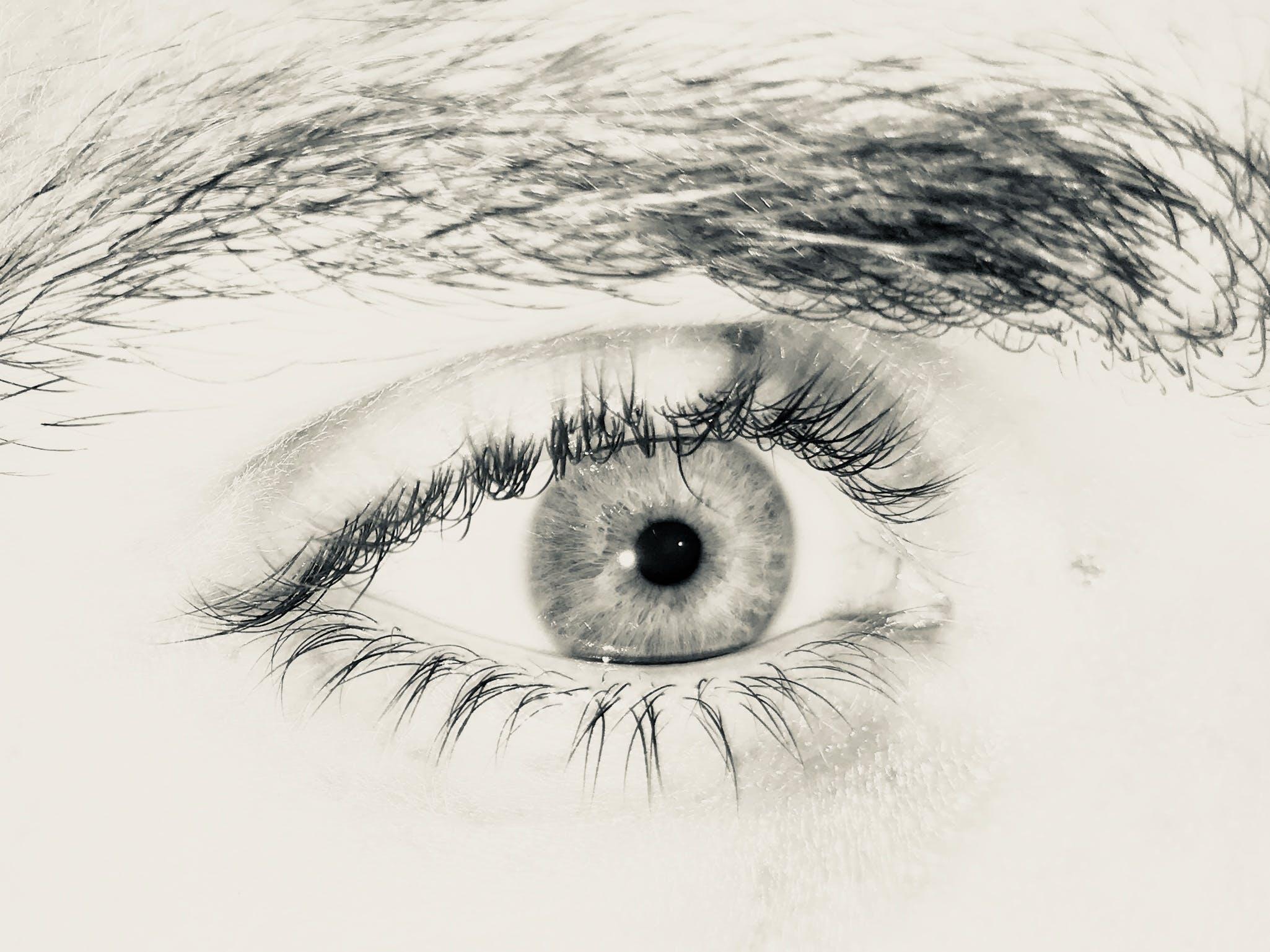 Free stock photo of black and white, blinking, eye, eyebrow