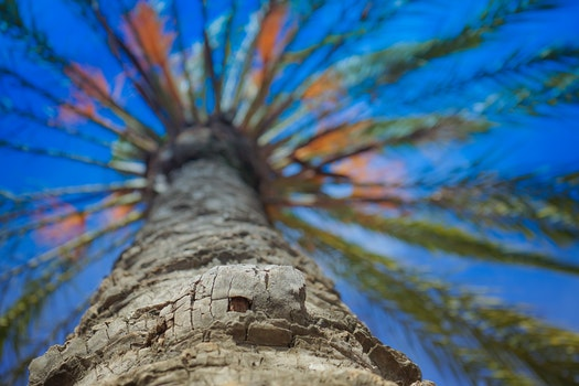 Free stock photo of sky, sunny, beach, water