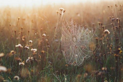 Fotos de stock gratuitas de al aire libre, amanecer, araña