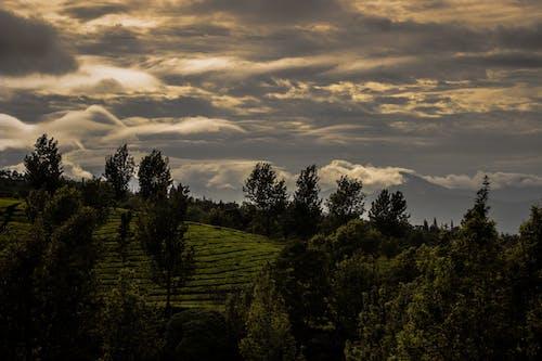 Ilmainen kuvapankkikuva tunnisteilla aikainen aamu, luonto, maisema, päivänvalo