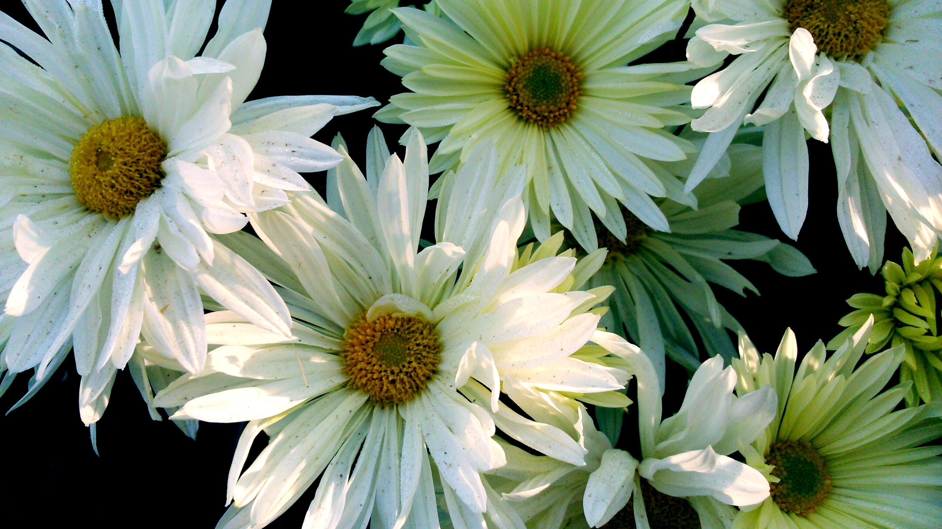 Free stock photo of beautiful flowers, beauty in nature, bunch of flowers, flowers