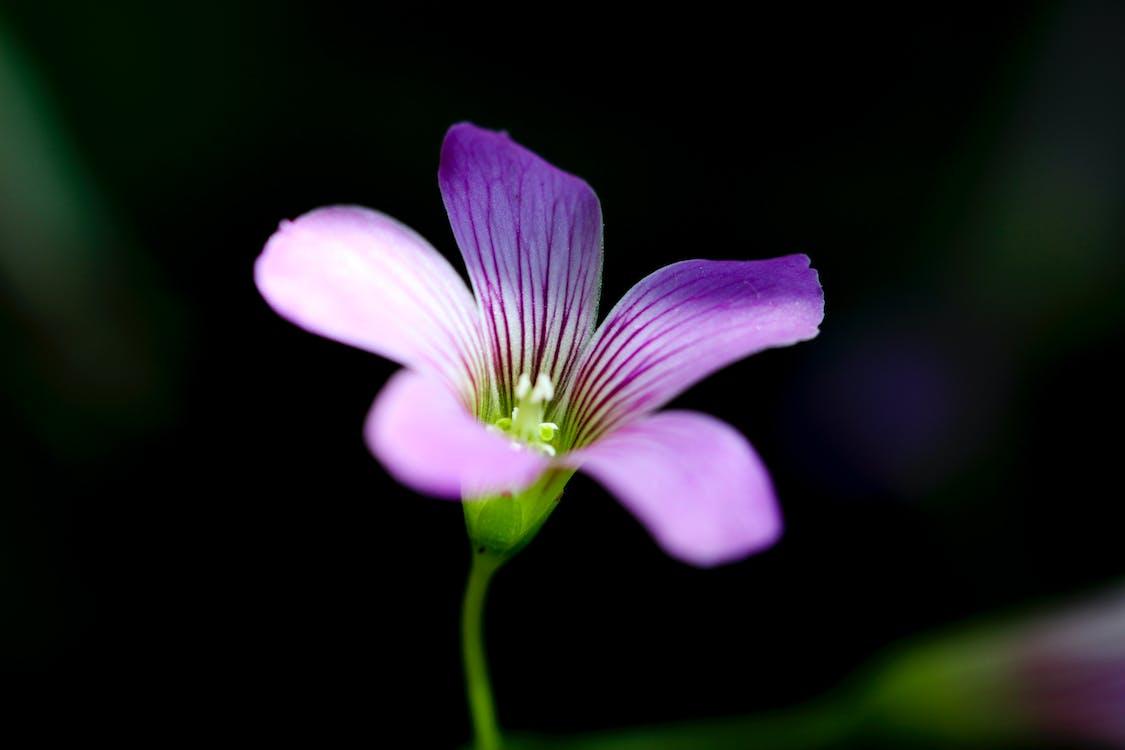 botaniczny, flora, kolory