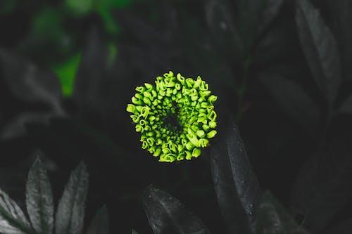 Бесплатное стоковое фото с ботанический, заводы, природа, размытый