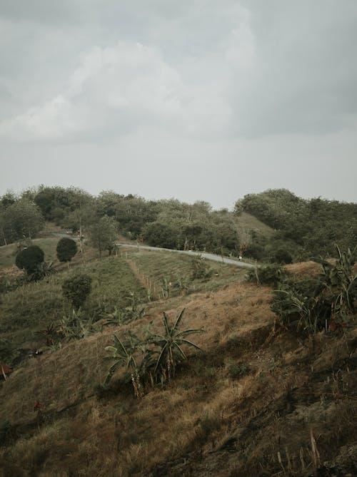 Foto profissional grátis de agricultura, água, ao ar livre