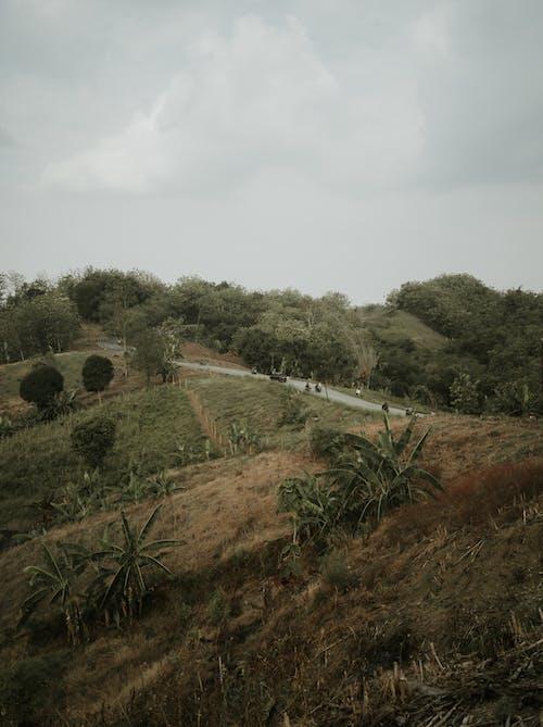 Foto profissional grátis de agricultura, ao ar livre, área