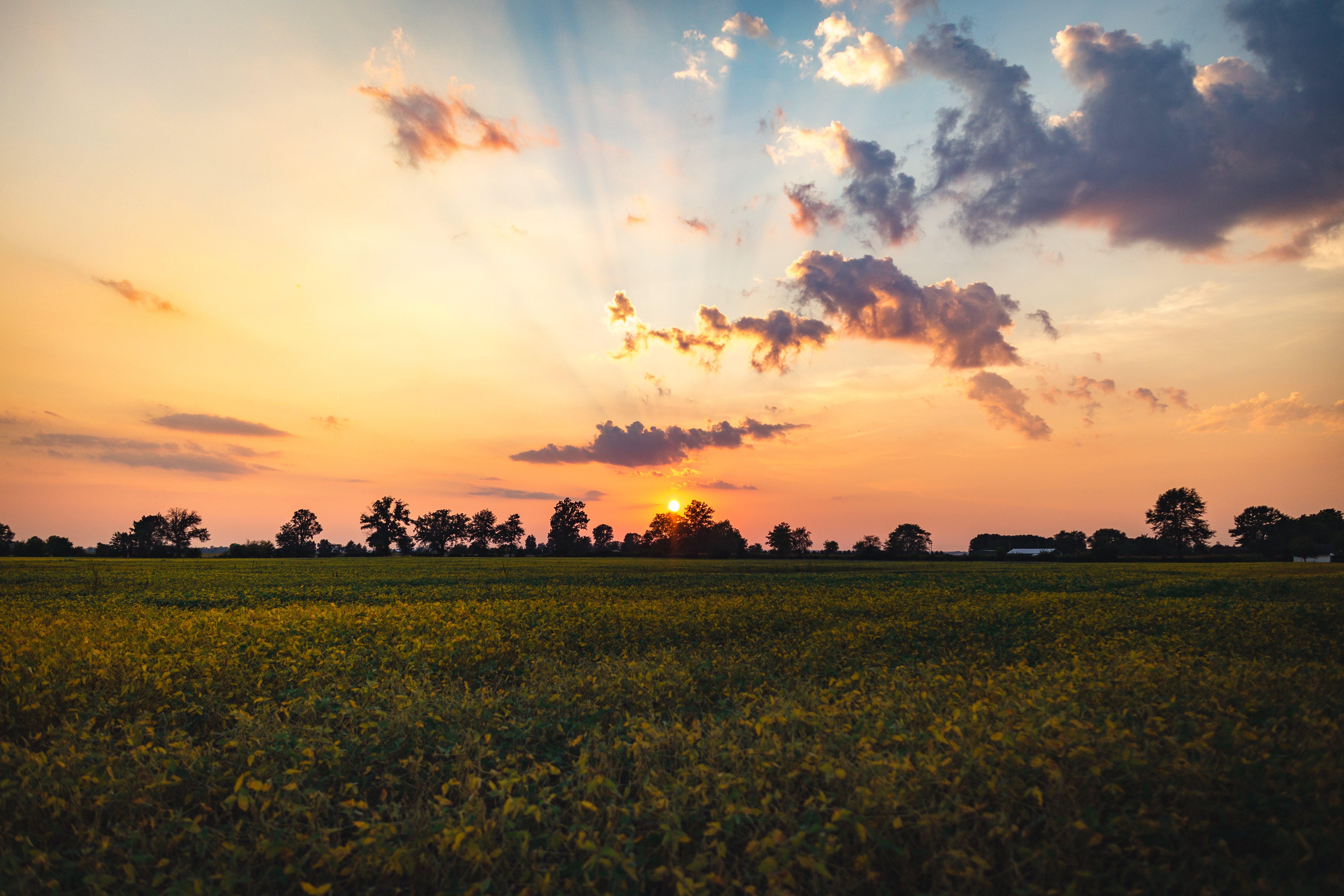 clouds, field, lawn