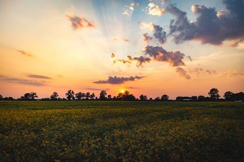 Imagine de stoc gratuită din apus, câmp, cer, gazon