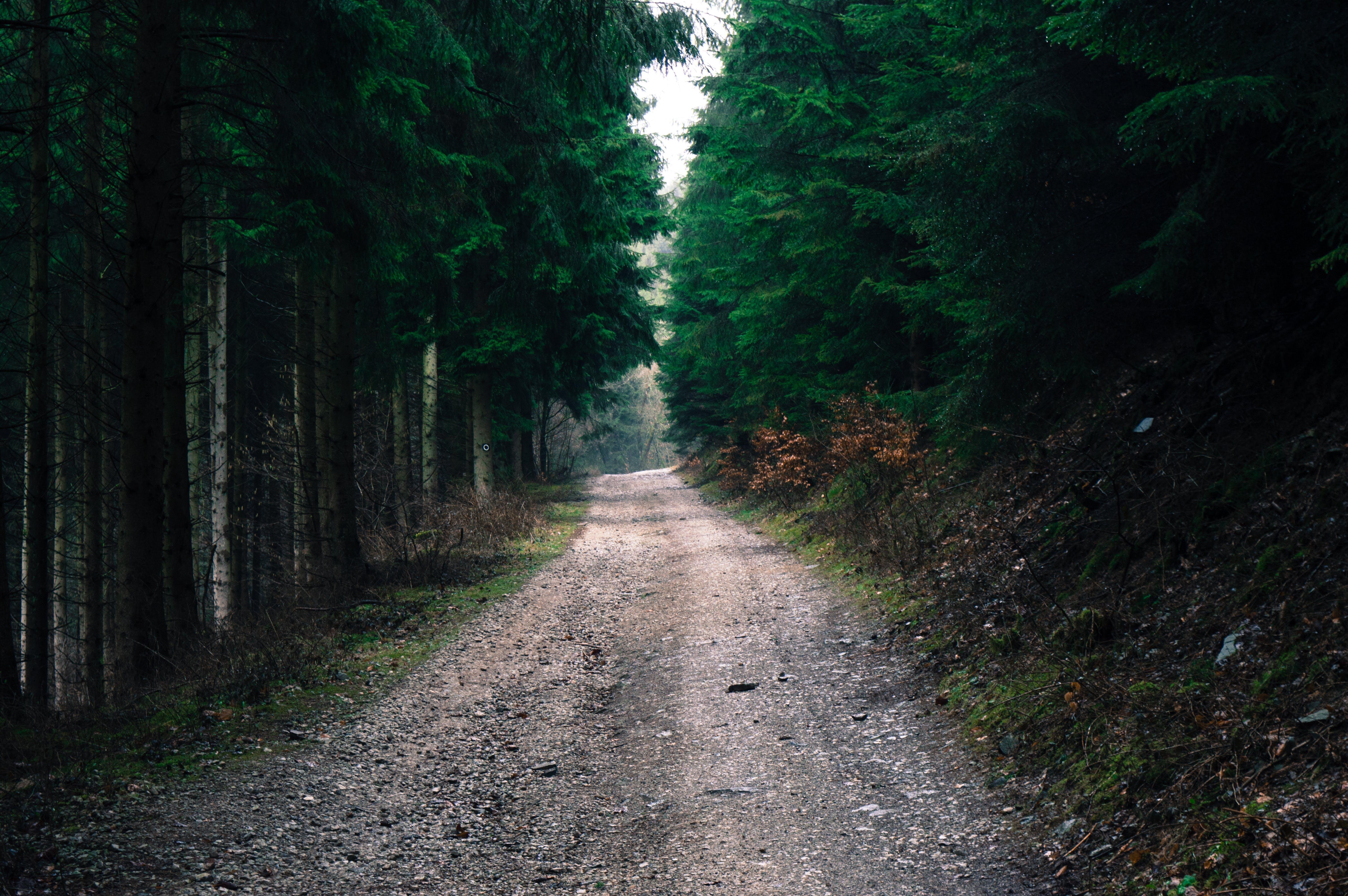 Ingyenes stockfotó erdő, fák, földes út, hajnal témában