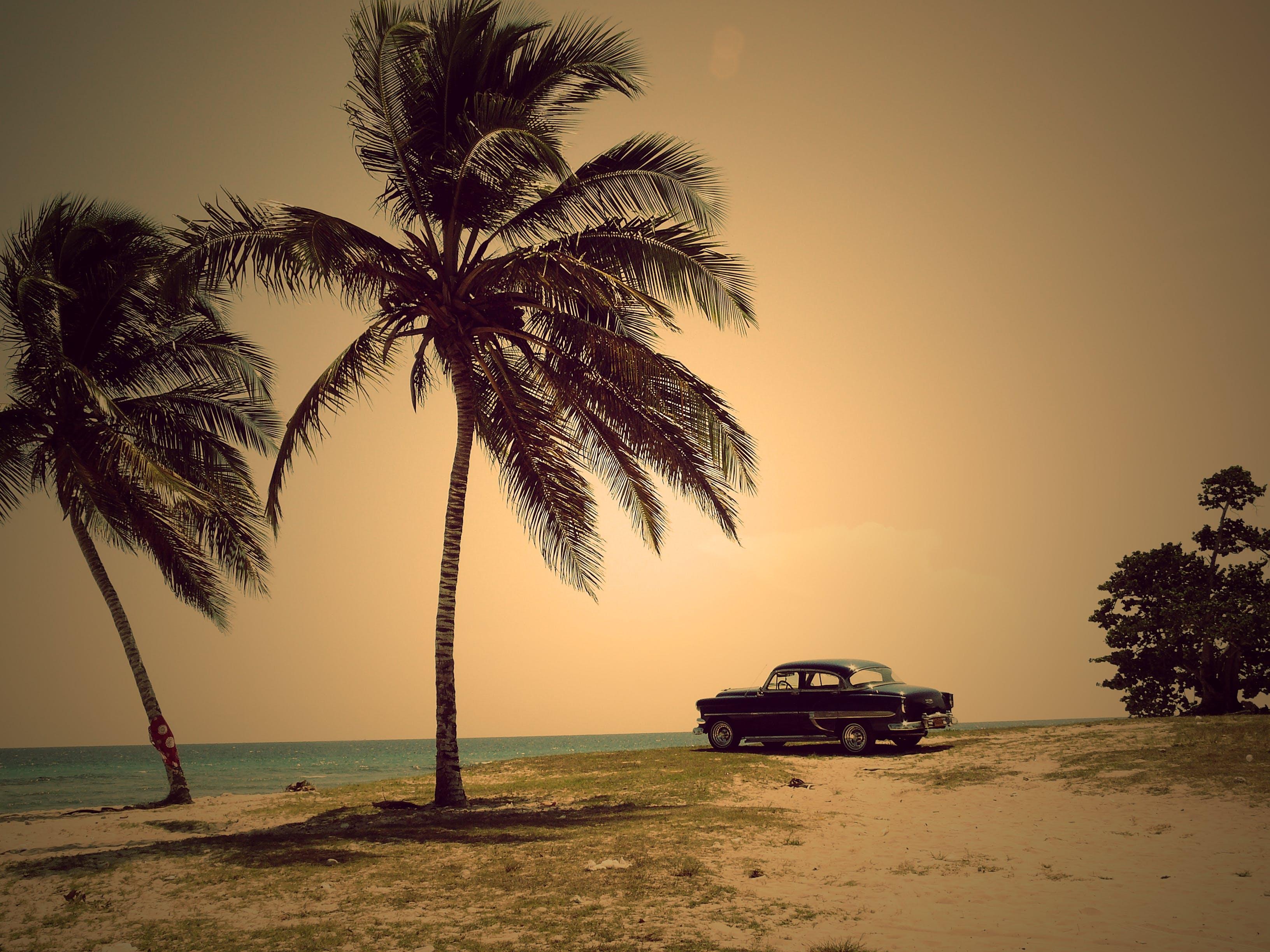 Бесплатное стоковое фото с автомобиль, вода, деревья, дневное время