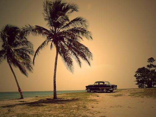 Gratis lagerfoto af bil, dagtimer, græs, hav