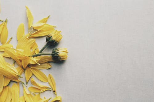 Желтые цветы ромашки на поверхности