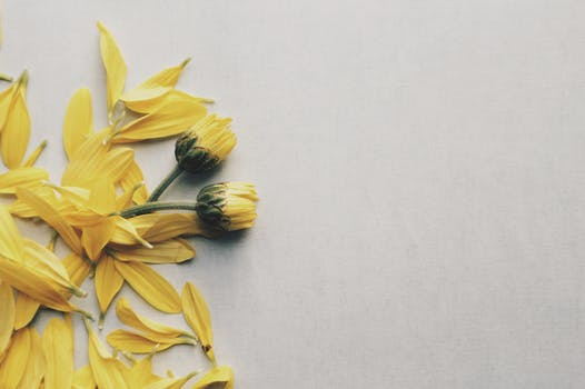 1000 beautiful yellow flower photos pexels free stock photos yellow daisy flowers on surface mightylinksfo