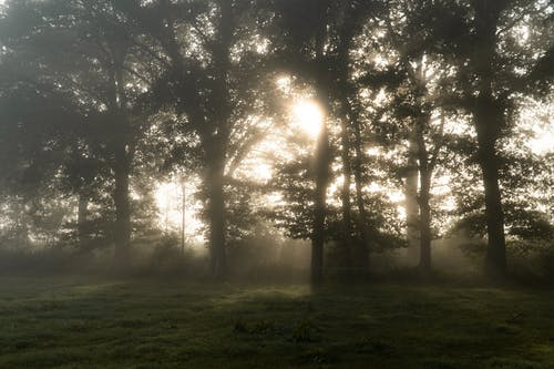 下落, 光, 光線 的 免费素材图片