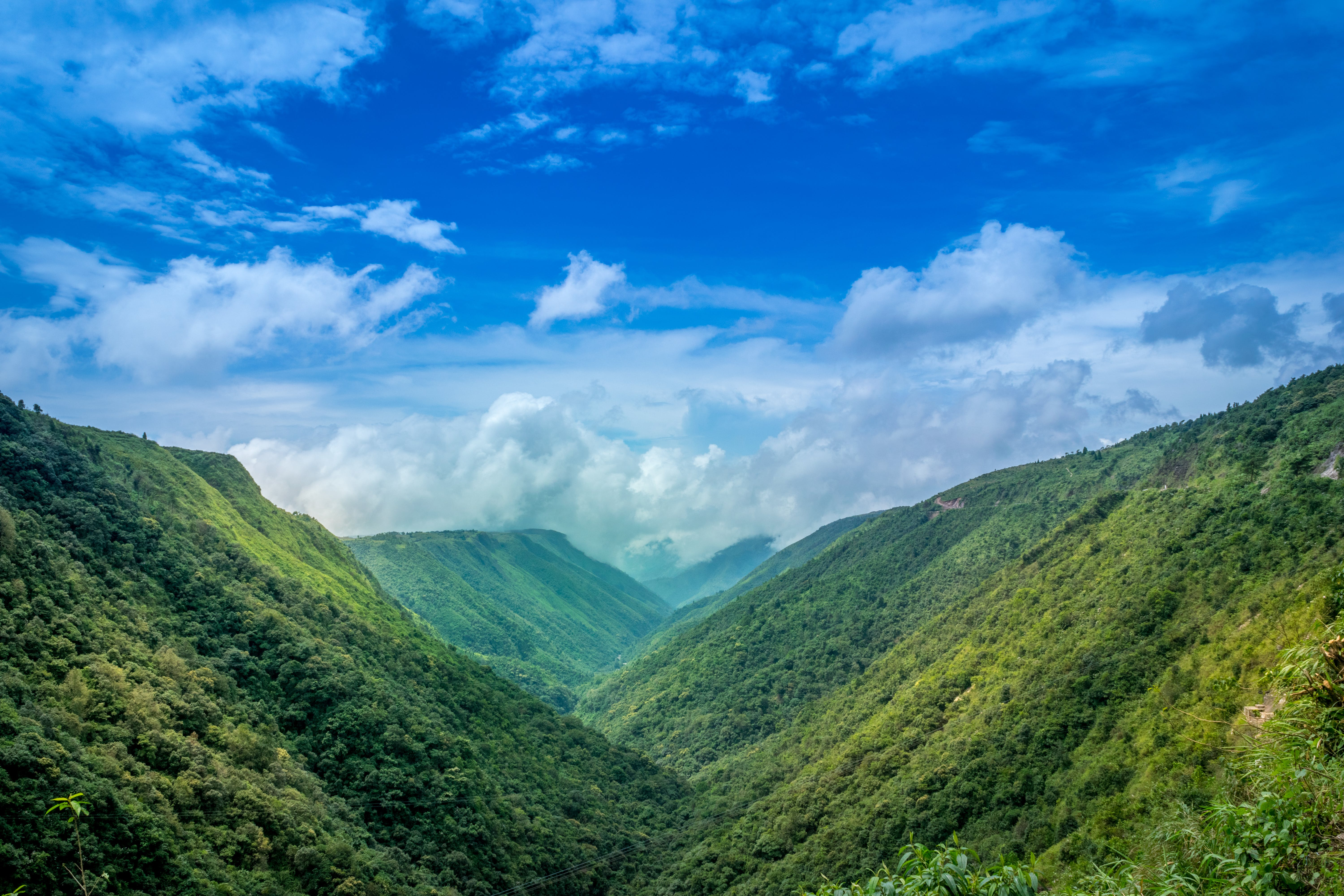 Green Plants Covered Mountain