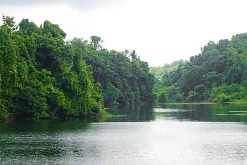 Darmowe zdjęcie z galerii z ciemne tło lasu, ciemnozielone rośliny, dolina jeziora