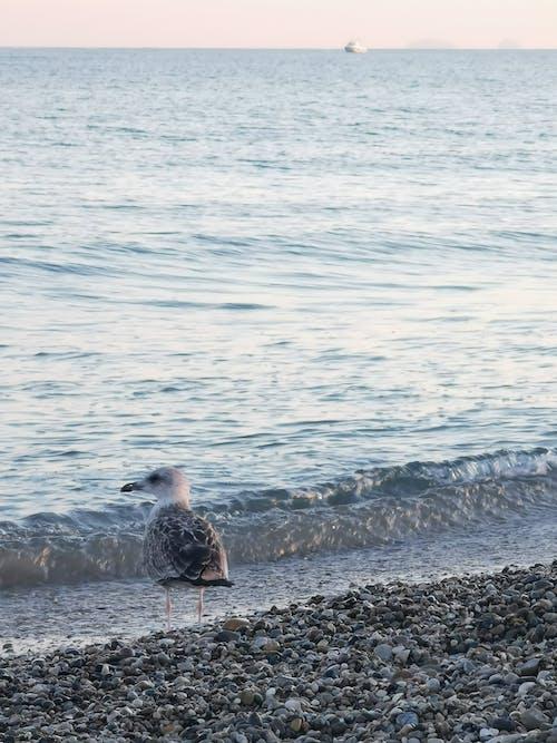 Free stock photo of bird, nature, seabird