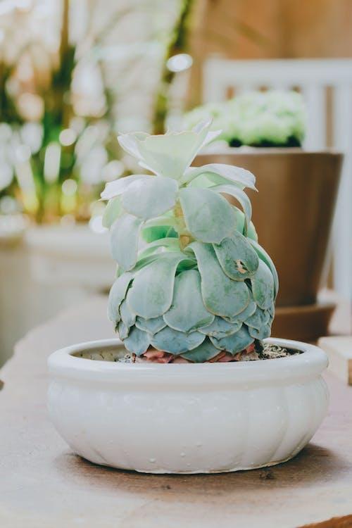 Безкоштовне стокове фото на тему «ваза, всередині, горщик, декор»