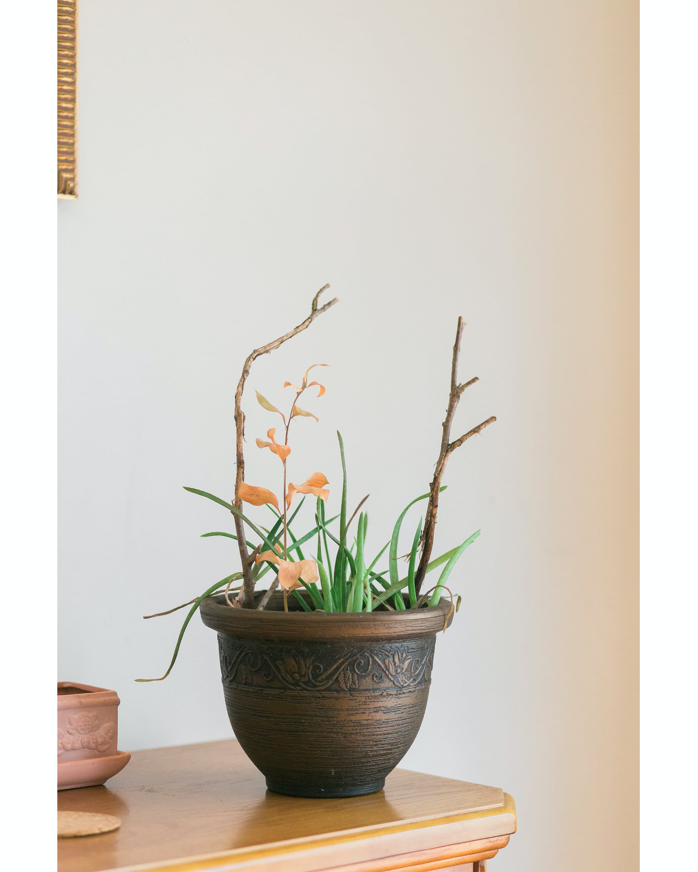 Green Aloe Vera Plant With Brown Ceramic Plant Pot