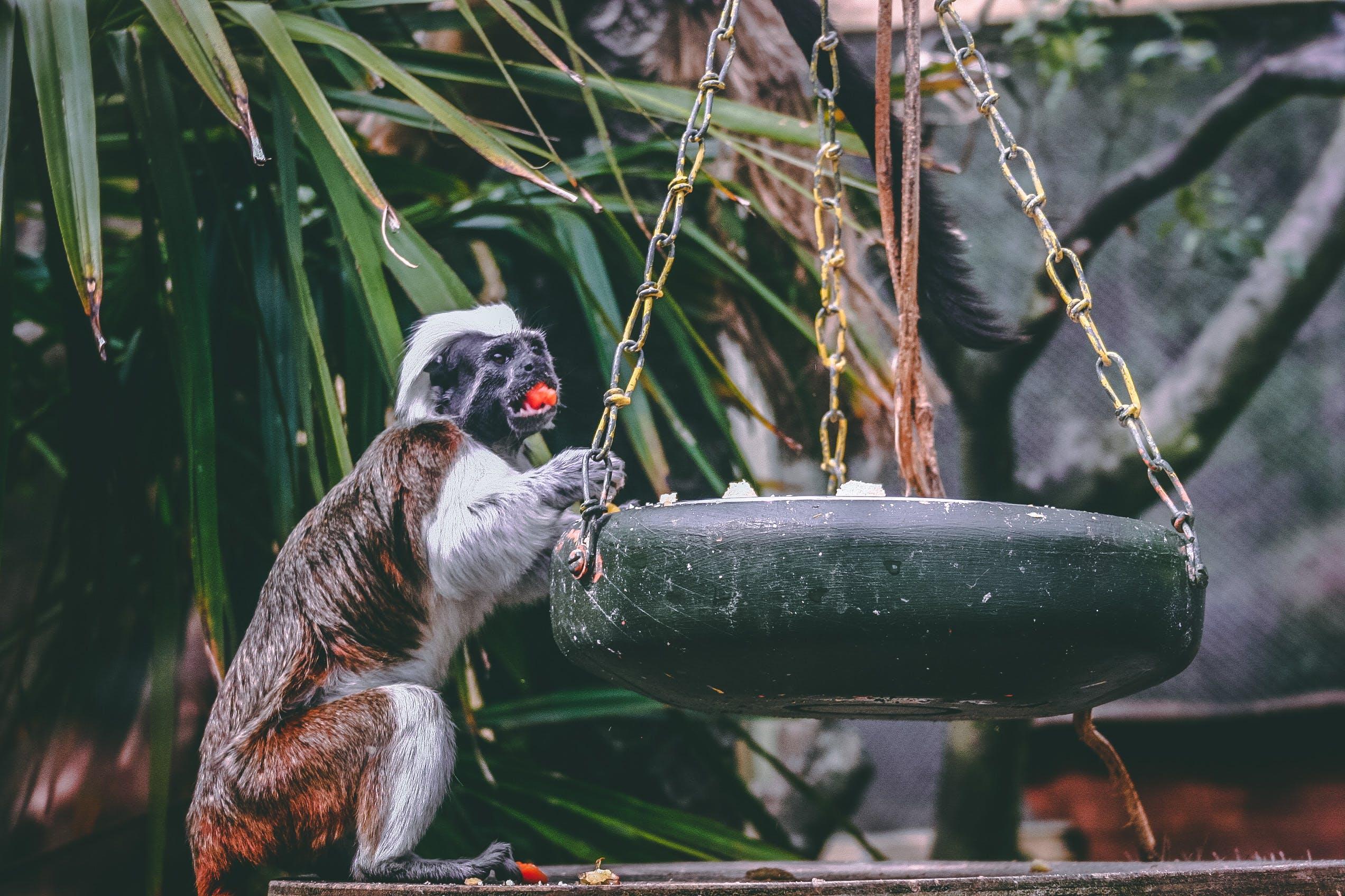 Gratis lagerfoto af abe sidder, abeunge, dagslys, dyr