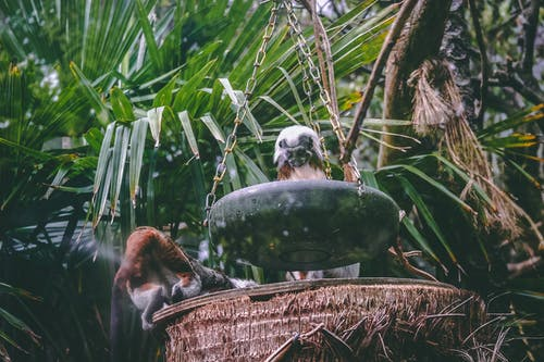 Foto stok gratis air, alam, bayi monyet, binatang