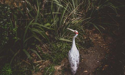 Foto stok gratis alam, bulu, burung besar, leher panjang