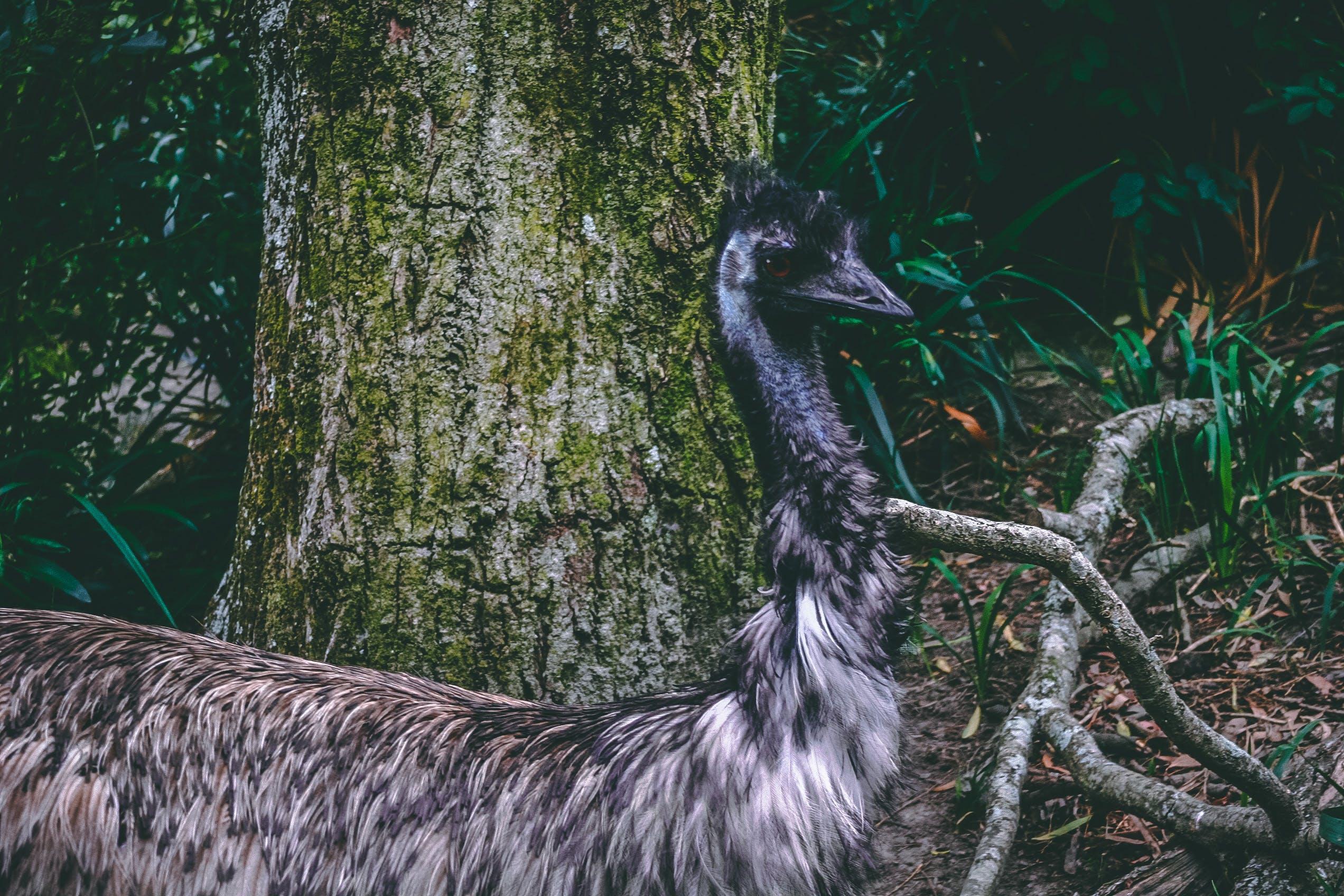 エキゾチック, トロピカル, パーク, 動物の無料の写真素材