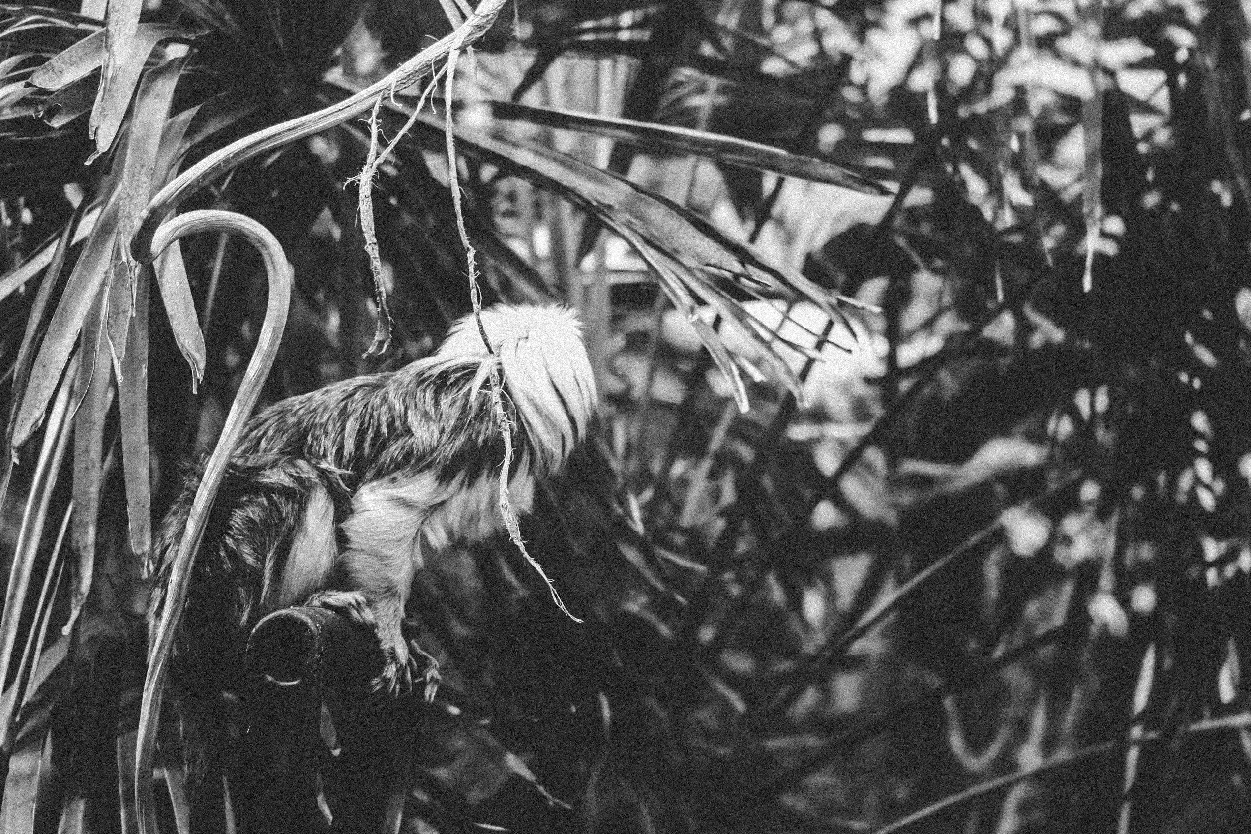 Grayscale Photography of Animal Perching on Metal Near Plants