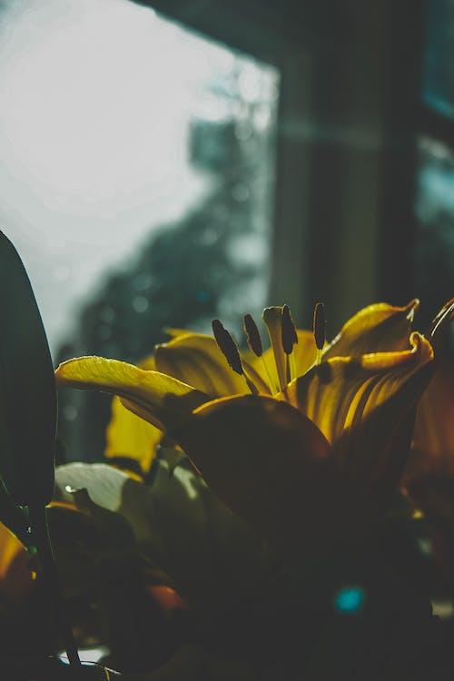 Foto stok gratis bohlam, bunga, bunga kuning, gelap