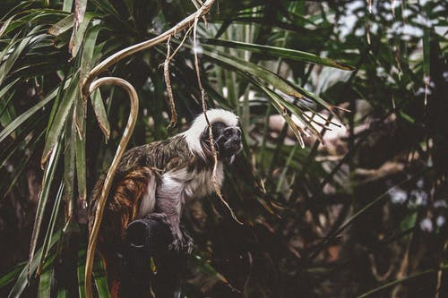 Selective Focus Photography of Monkey on Trees