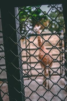 Free stock photo of wall, animal, zoo, home