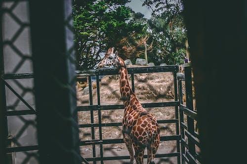 Foto stok gratis binatang, binatang liar, cahaya, fotografi binatang